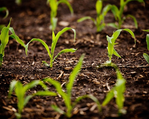 Soil-Moisture-Management-Featured-Image