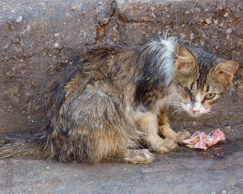 Animal-Control-featured-img