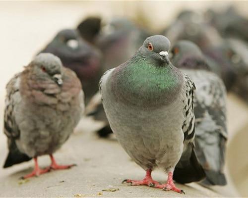Bird-control-featured-img