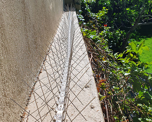 Physical-repellents-plastic-bird-spikes-feature-image-new