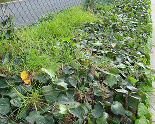 Weed-control-feature-image