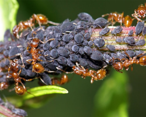 Insect-Control-Feature-Image-new2
