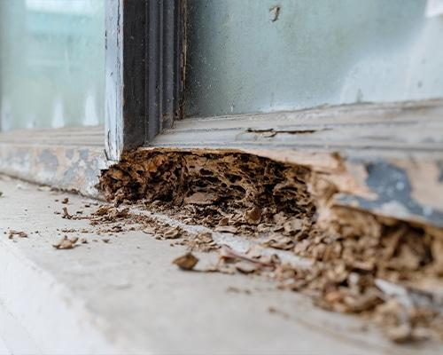 Termite-Control-SUBTERRANEAN-termites-featured-img-new2