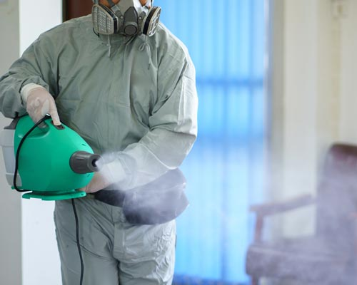Disinfectant_Cat_feature_img