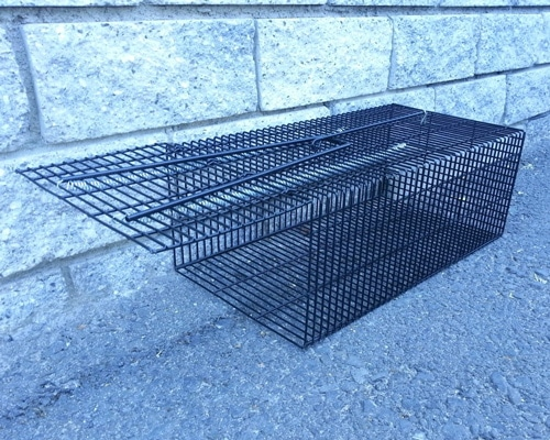 Live-Catch-Rodent-Traps-rat-cage-trap-feature-img