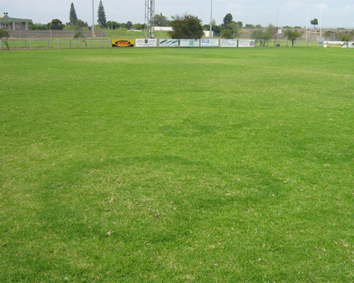Turf-disease-control-featured-image-new2